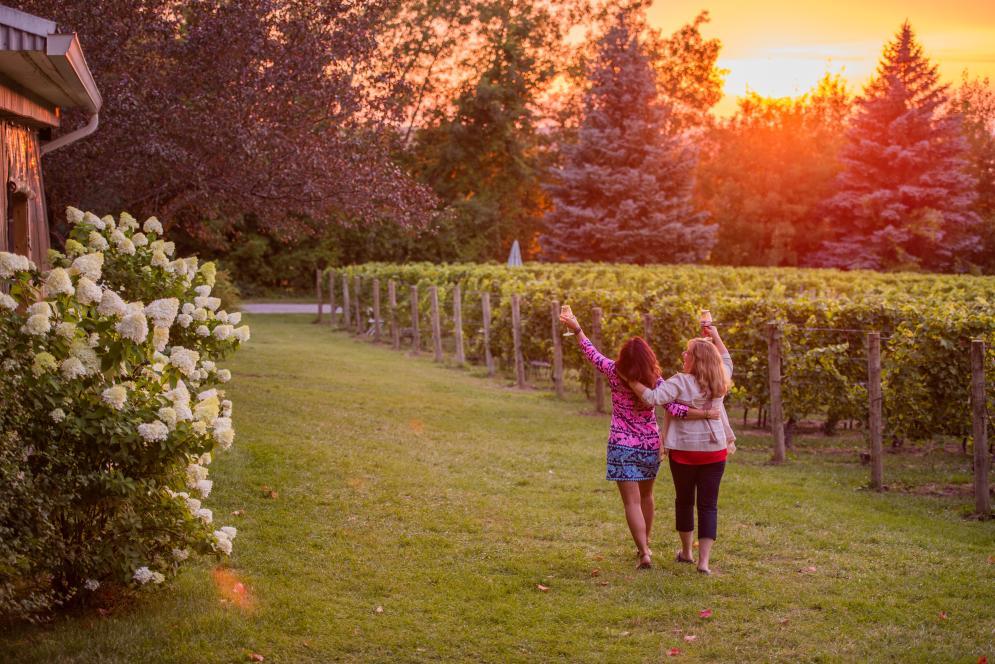 Drinking Wine in the Vineyard