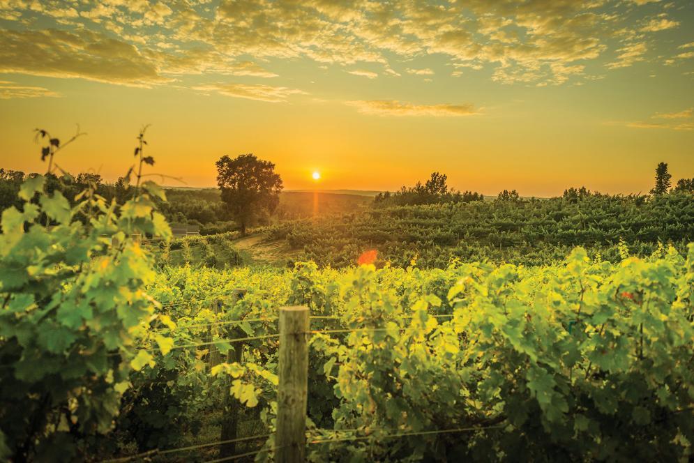 Ciccone Vineyards Leelanau County