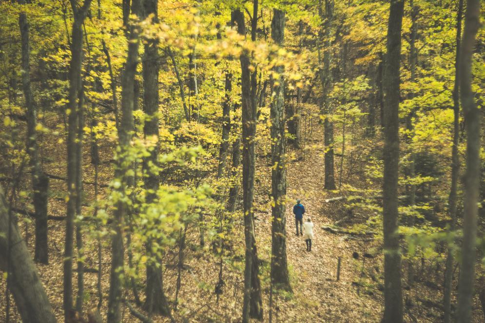 Fall Color on a Hike