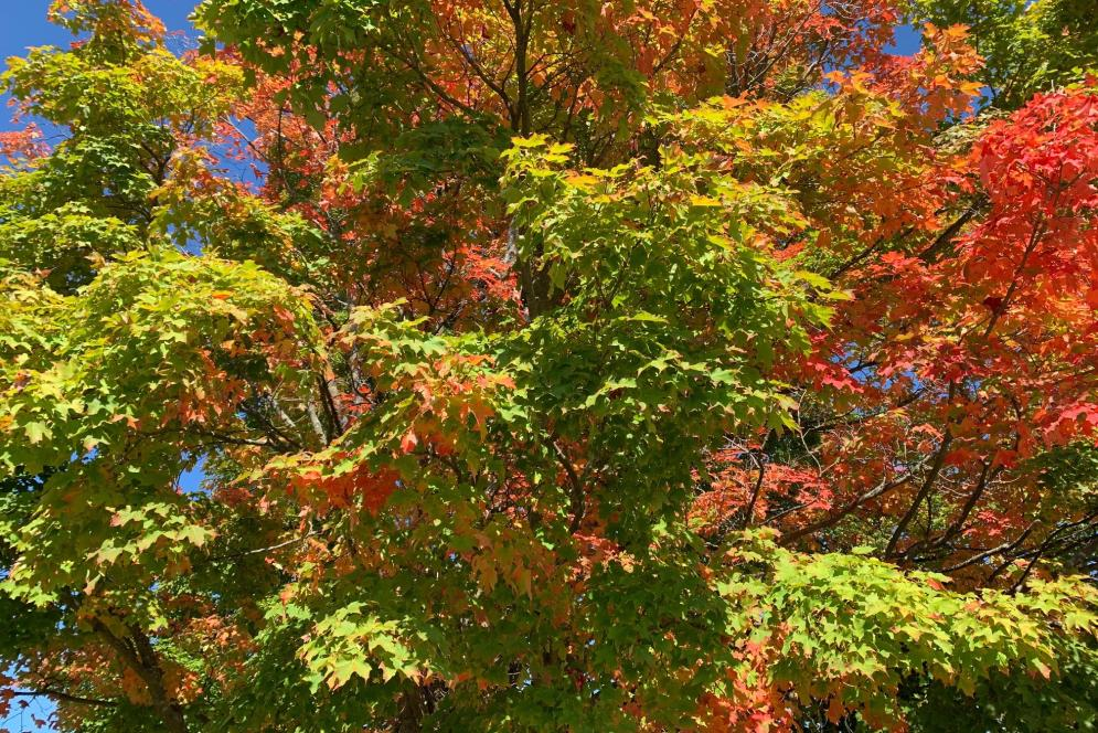 Fall Color in Traverse City
