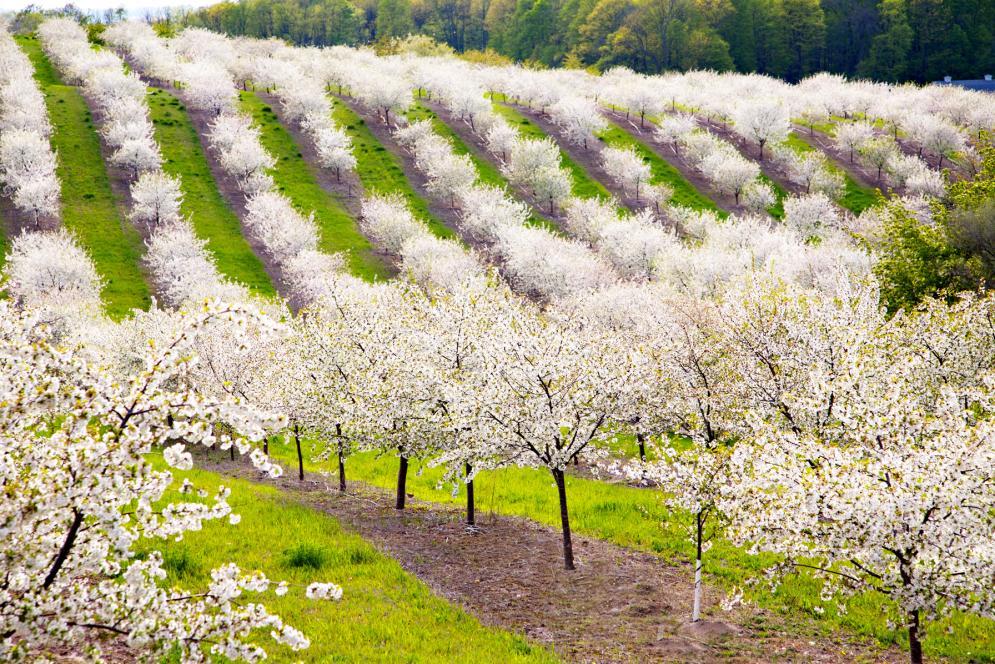 cherry-grove-hills-img_7764-2009-05-18-at-18-08-04-copy