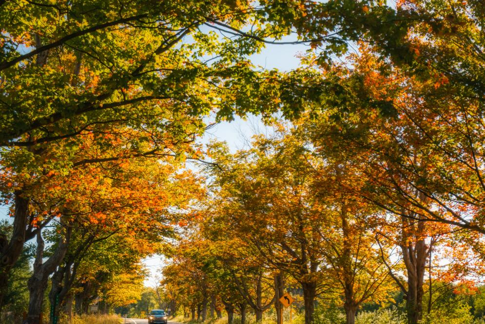 Fall Drive on M-22 with tree-lined street