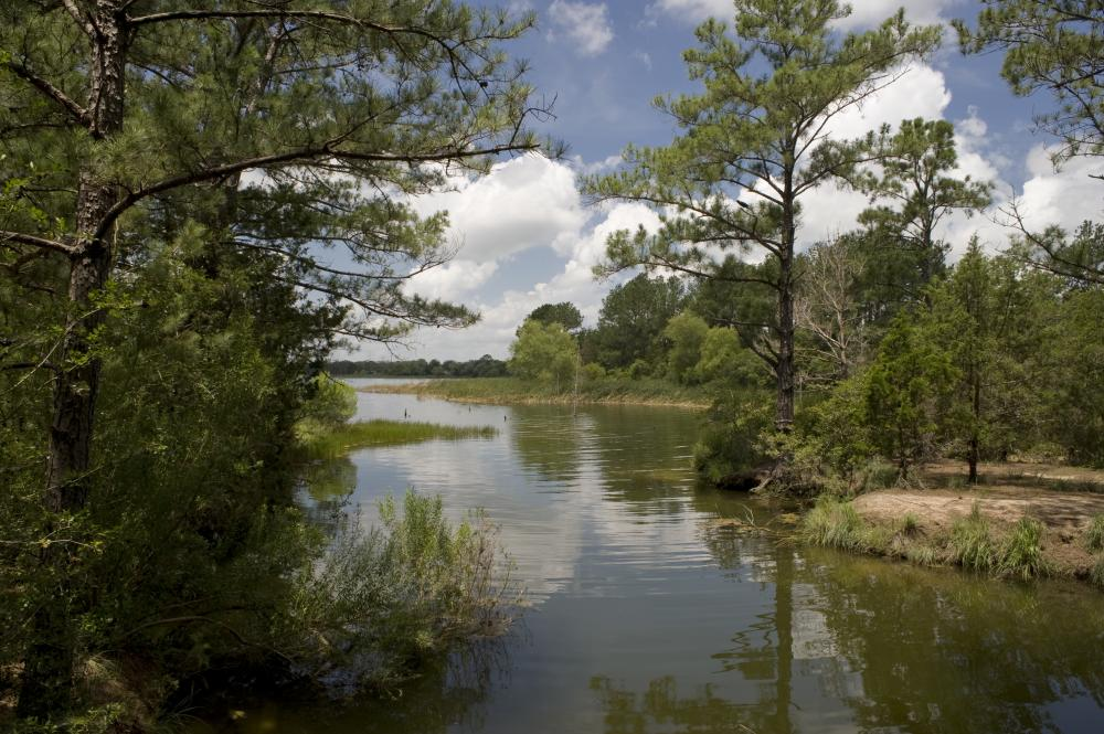 Lake and trees at Bastrop State Park in Bastrop Texas near Austin