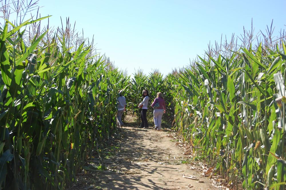 With family festivals throughout the year, fun is always in season at Shady Brook Farm!