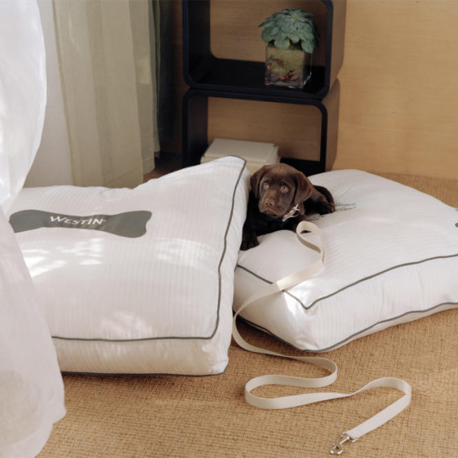 Pups are welcome and get their own bed at the Westin BWI.