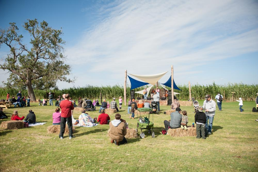 A crowd of children and parents sit on hay bales in front of a small outdoor stage with band at Barton Hill Farms. Behind the stage, there is a cornfield with tall cornstalks, and a white and blue shade covers the stage