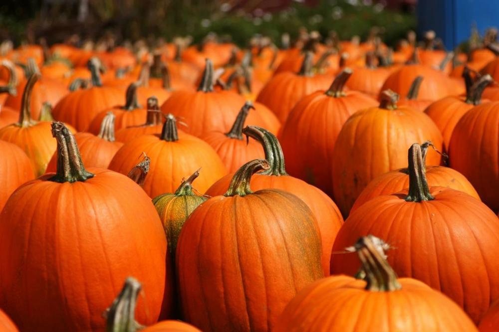 Whispering Pines Harvest Festival pumpkins