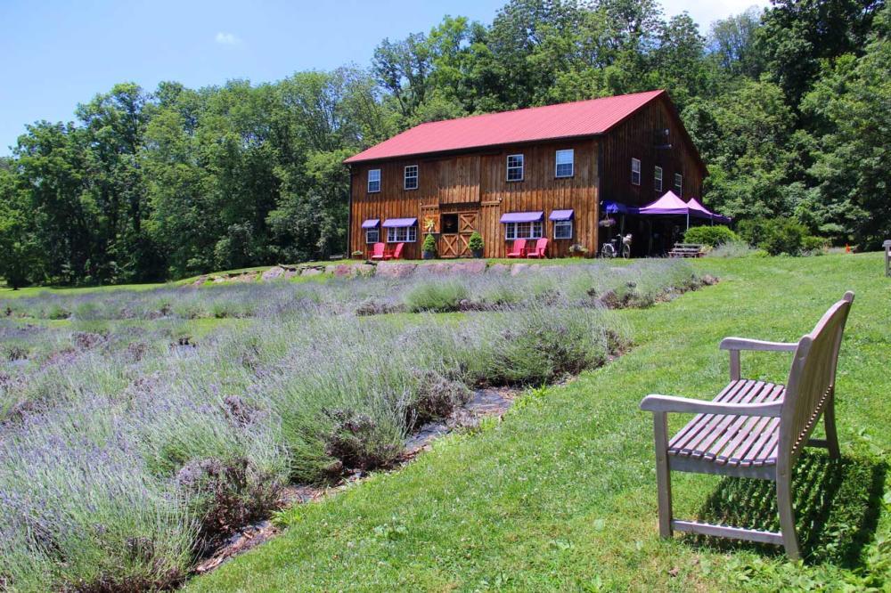 Peace Valley Lavender Farm (Brooke blog)