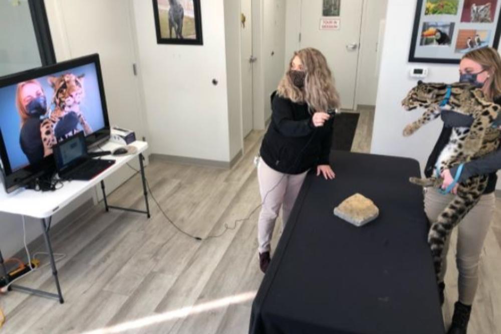 Columbus Zoo animal ambassadors making a virtual visit