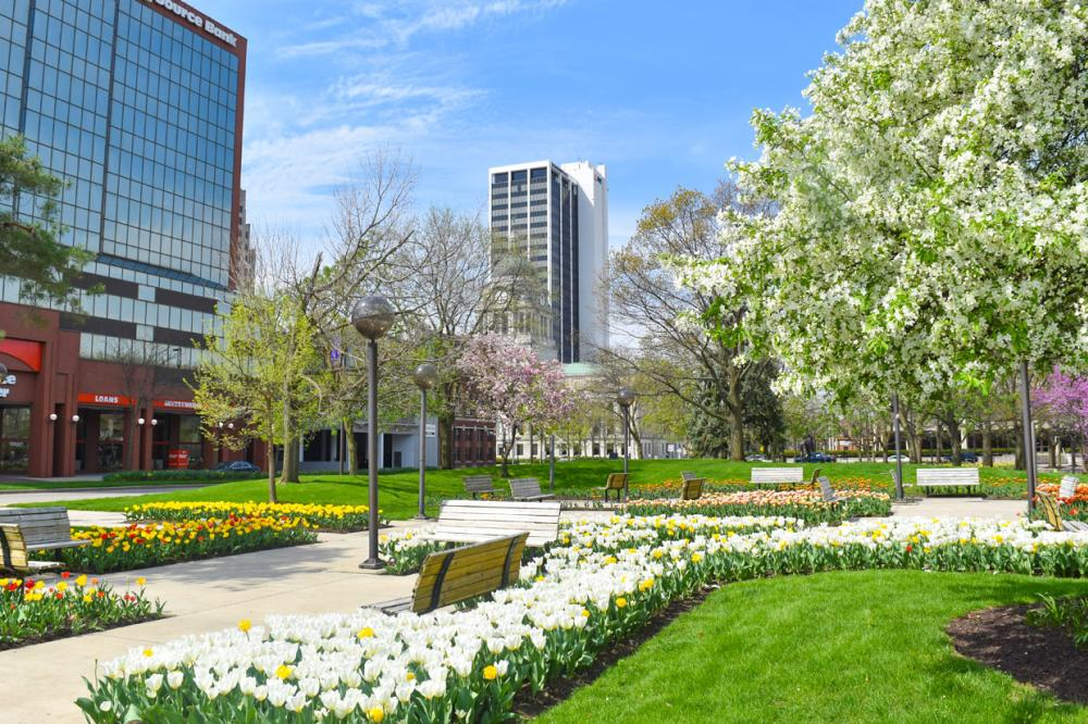Freimann Square in spring