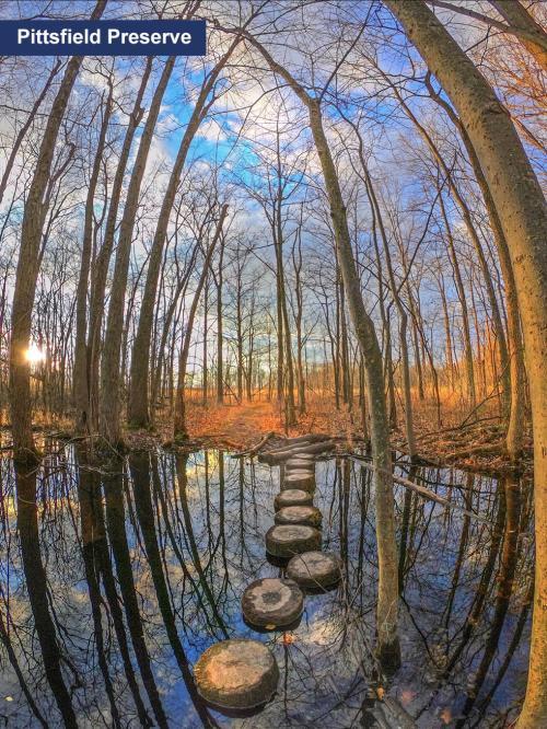 Pittsfield Preserve Nature Trail