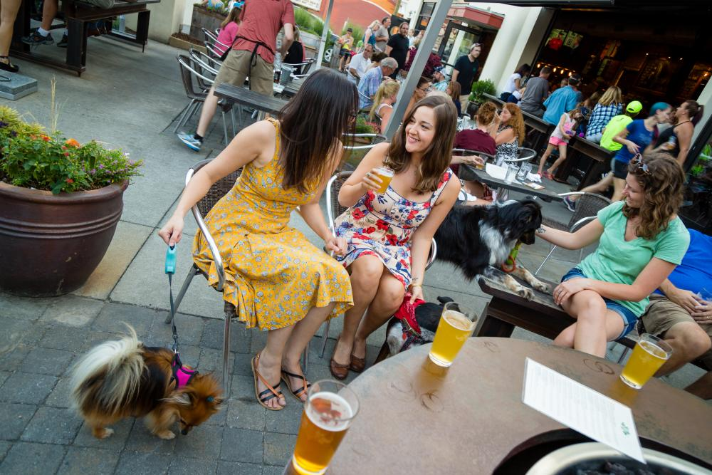 Friends & Dogs at Wicked Weed Patio