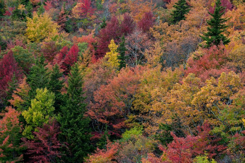 Autumn hues as seen at Rough Ridge on the Blue Ridge Parkway