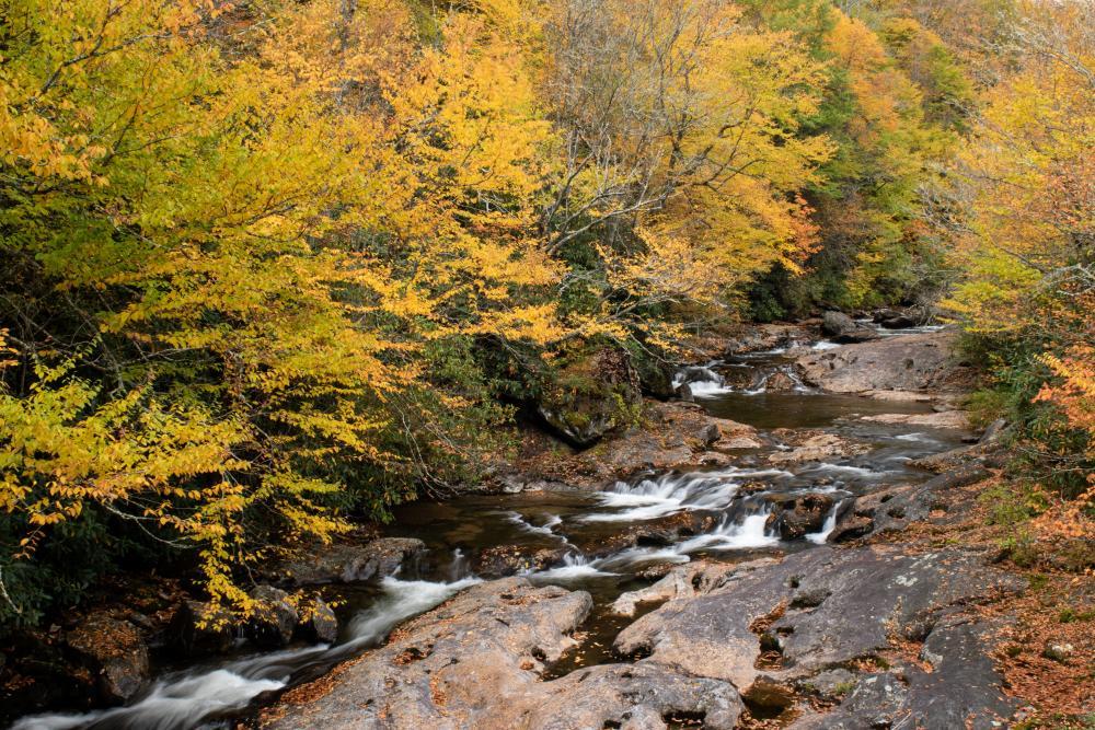 Golden leaves adorn the creek along Highway 215 southwest of Asheville, NC