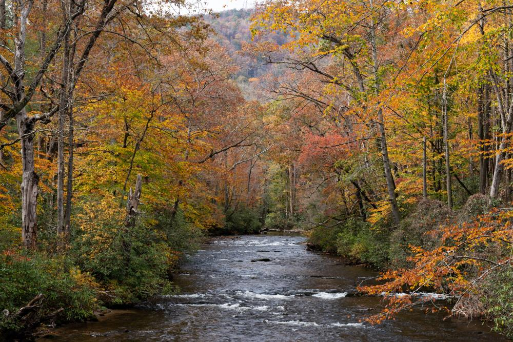Fall color along the banks of a river in Pisgah National Forest south of Asheville, NC
