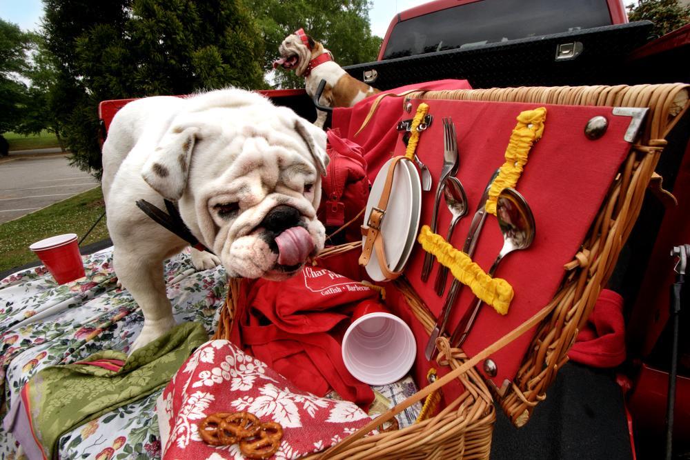 Bulldog picnic basket tailgate in Athens, GA