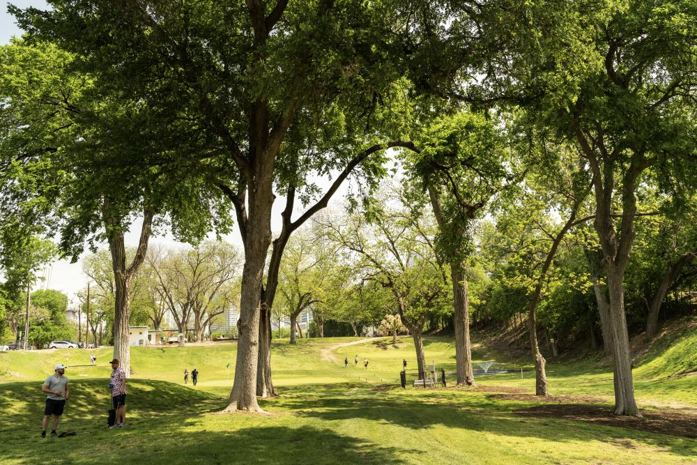landscape photo of the course and trees at Butler Park Pitch and Putt