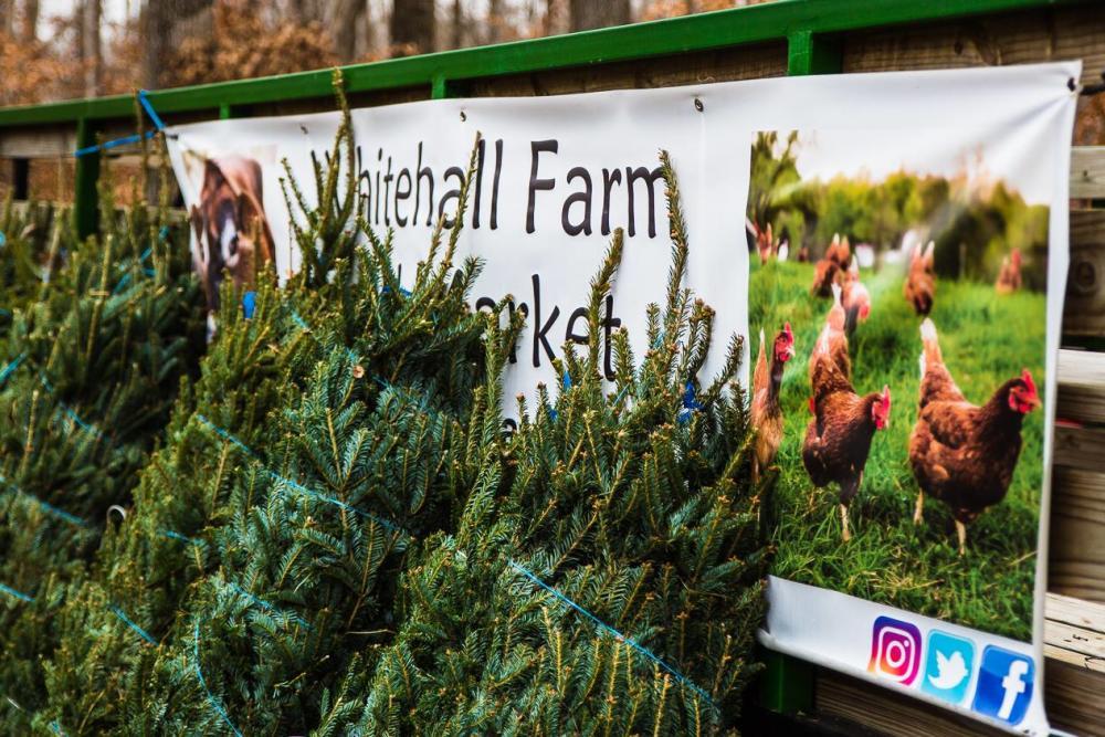 Whitehall Farms