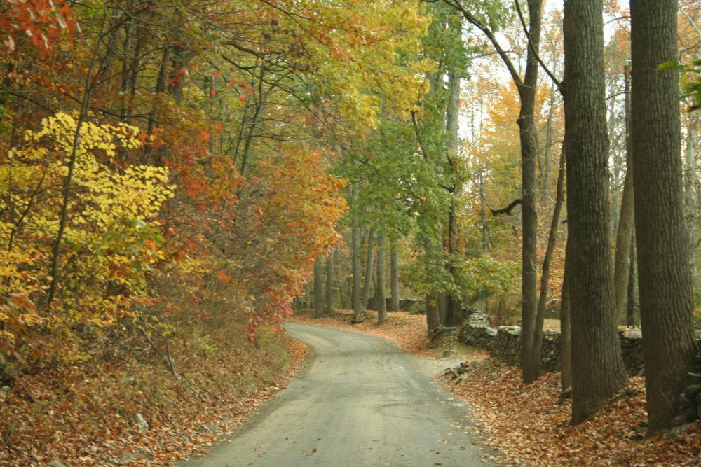 Fall-colored trees lining a road in Virginia