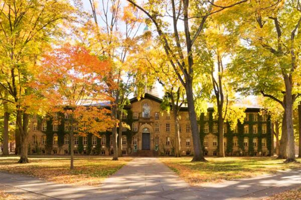 Bright yellow trees at Princeton University