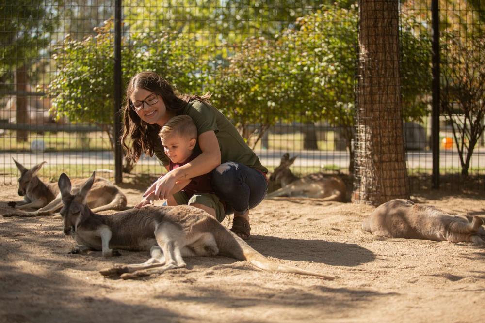 Petting Kangaroos at Tanganyika Wildlife Park