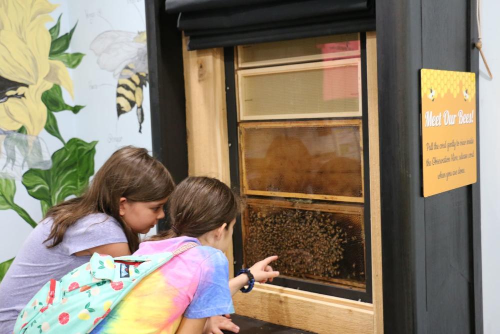 Exploring the Bee House at Botanica Wichita