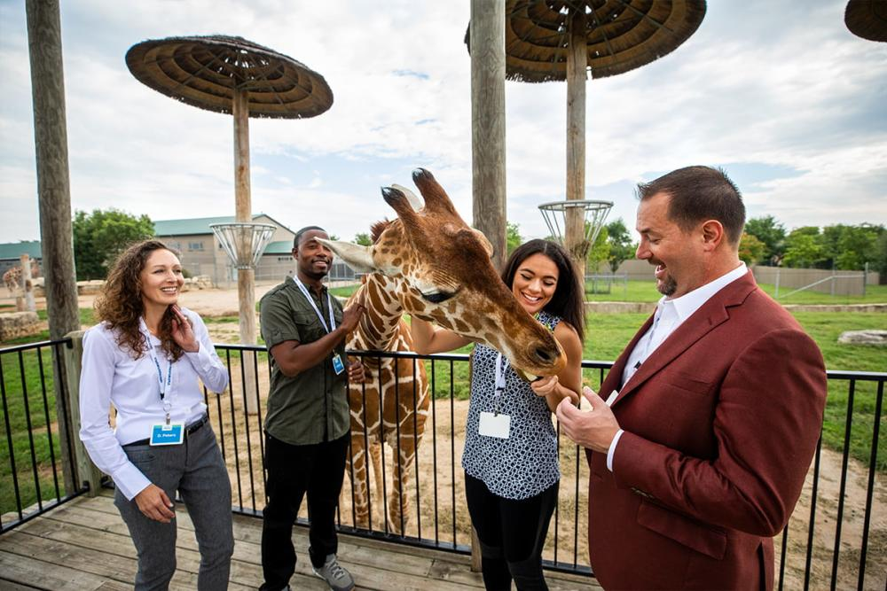 Tanganyika Group Giraffe Feeding group meetings