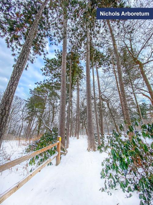 Nichols Arboretum in the winter, Ann Arbor, MI