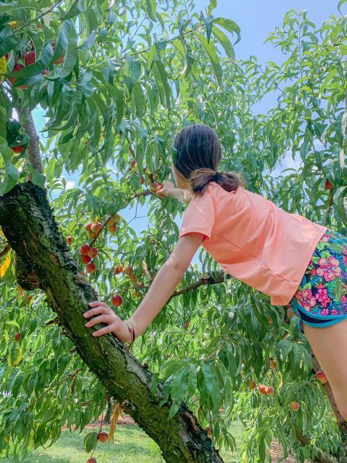 SoIN Fun Trail Carrie Huber's Peaches
