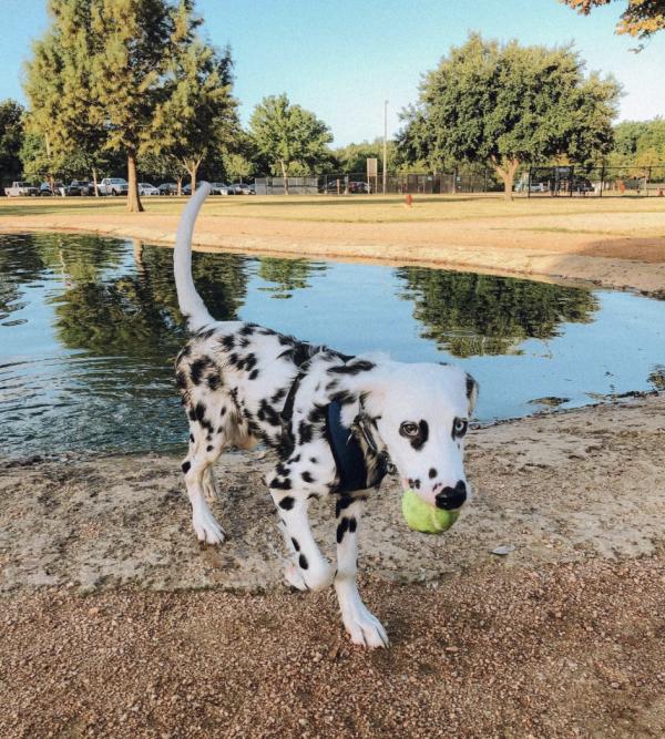 Bill Archer Dog Park