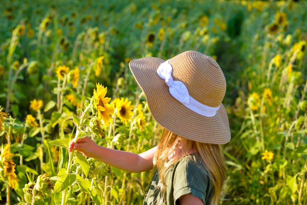 Girl picking sunflowers at Salomon Farm Park in Fort Wayne