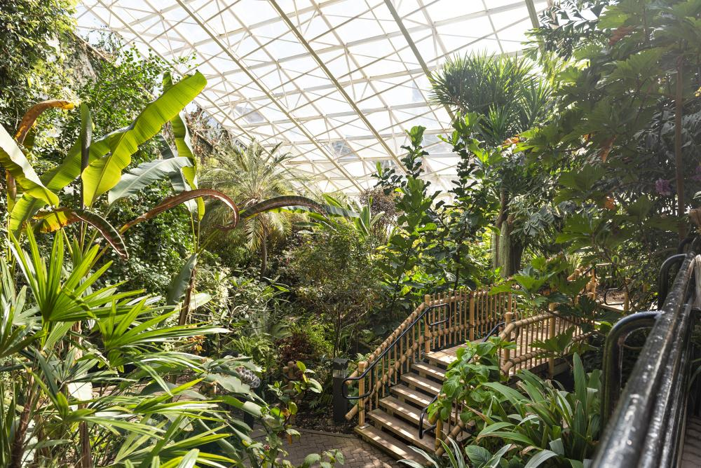 The indoor Tropical Gardens at the Botanical Conservatory in Fort Wayne