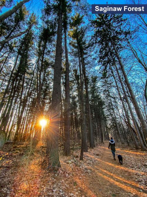 walking dog in saginaw Forest Woods