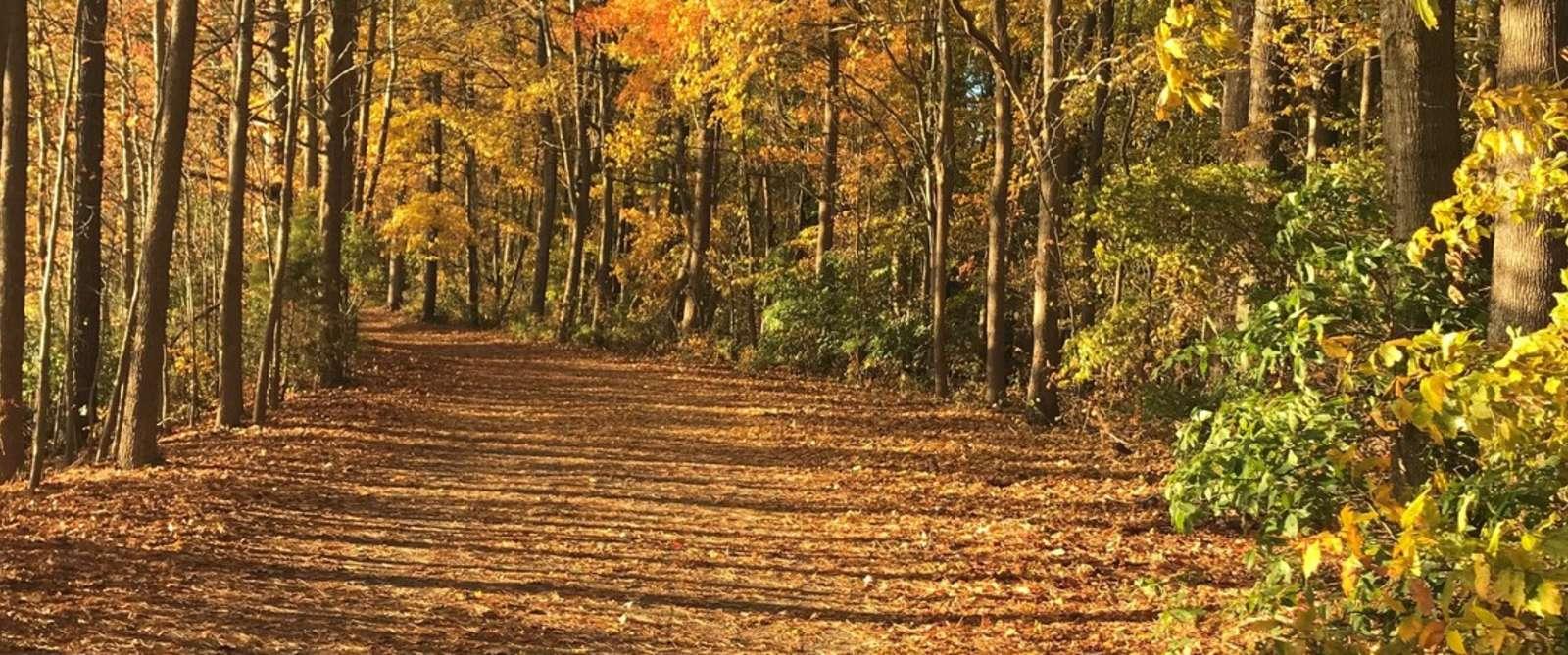 Oak Grove Lake Park Fall
