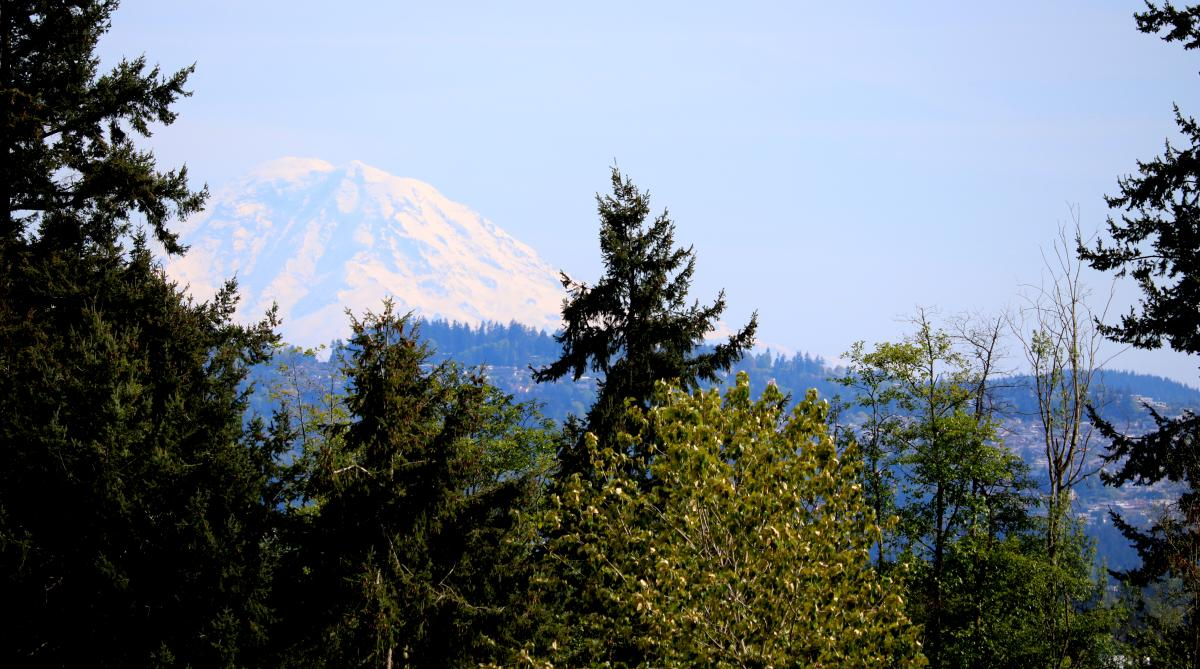 Mt Rainier at Watershed Park