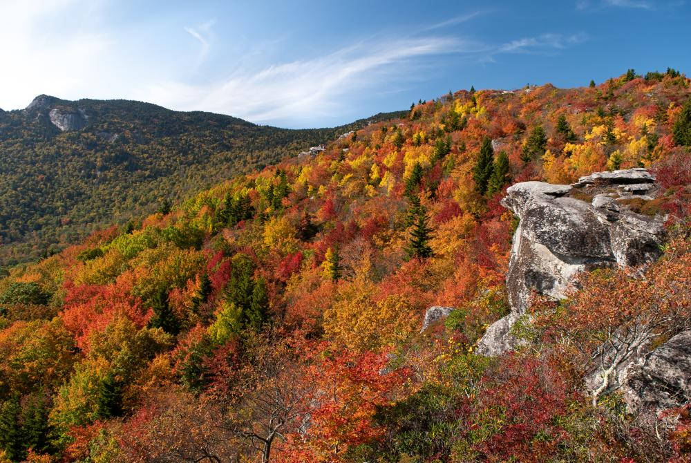 A vibrant array of colors at Rough Ridge with Grandfather Mountain seen behind