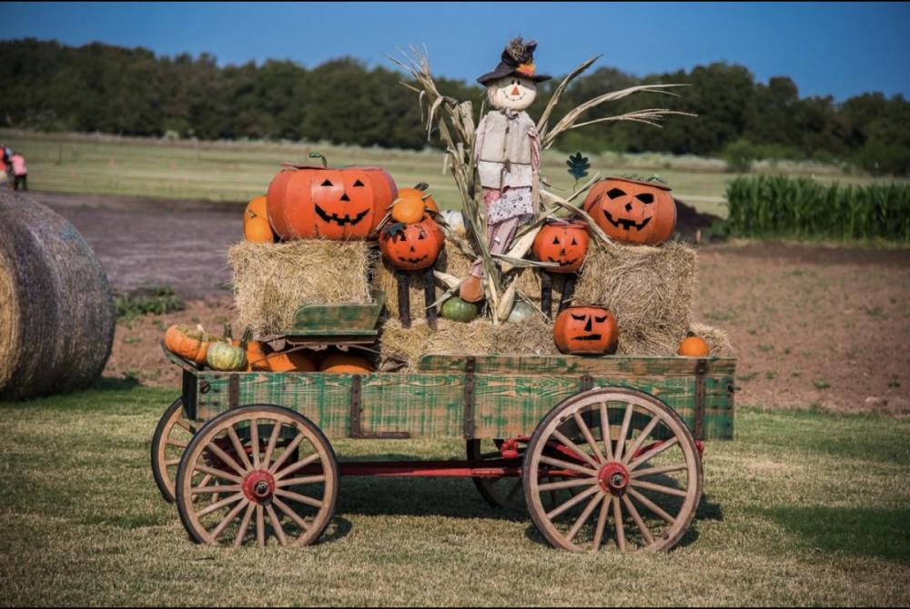 Barton Hills Pumpkin 2021 2