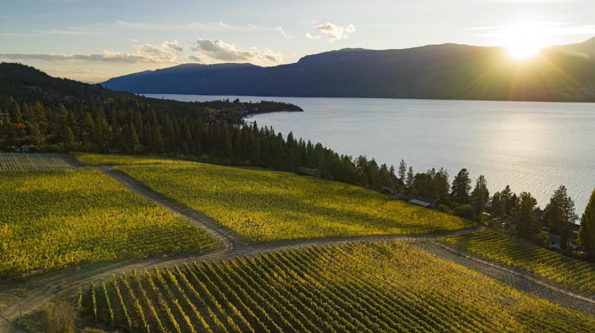 50th_Parallel_Estate_Winery_Aerial_October_21_