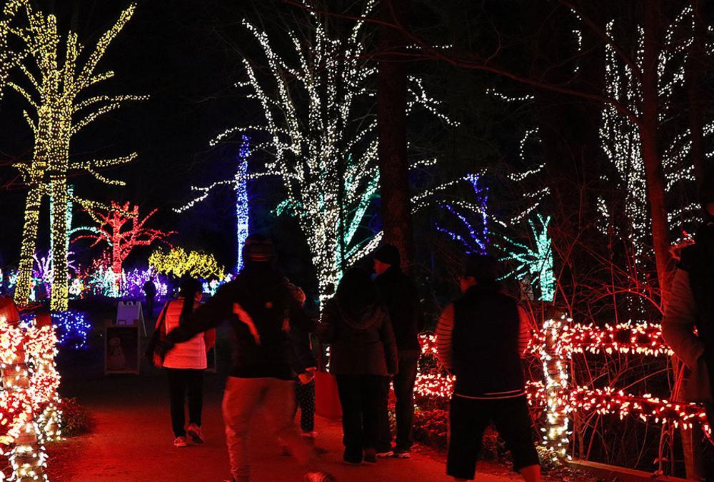 Meadowlark Winter Walk of Lights - Meadowlark Botanical Gardens