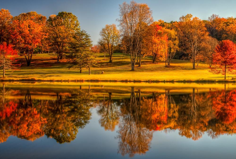 Meadowlark Fall