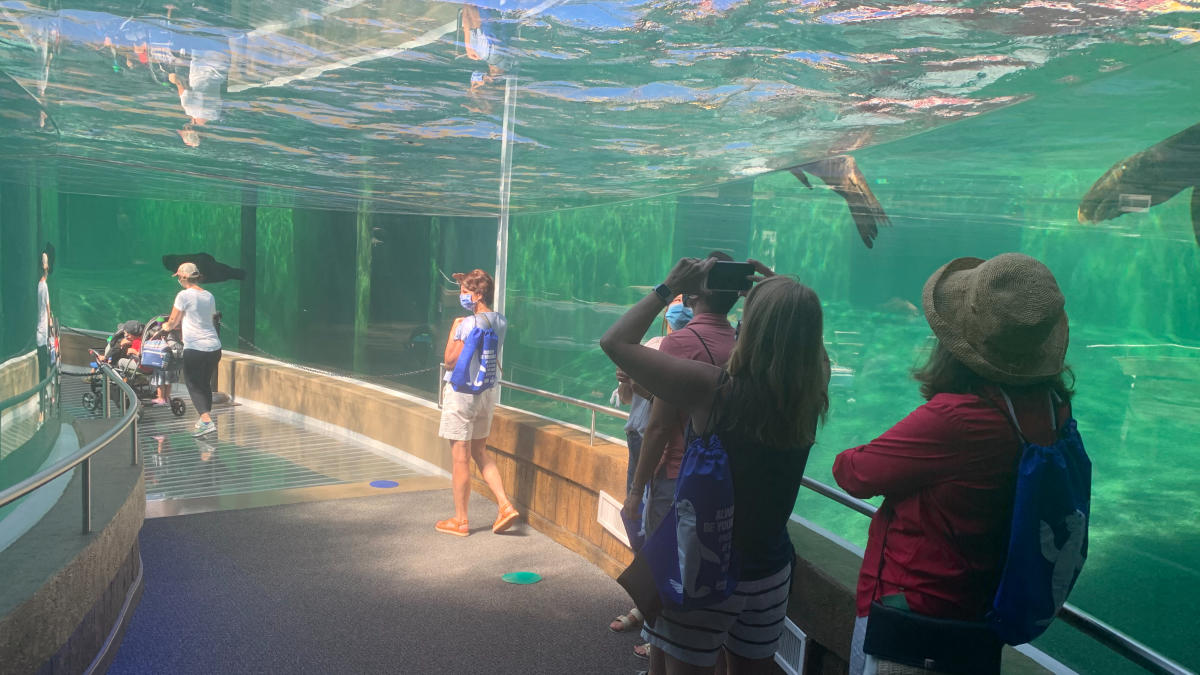 Underwater sea lion viewing tunnel at Adventure Cove