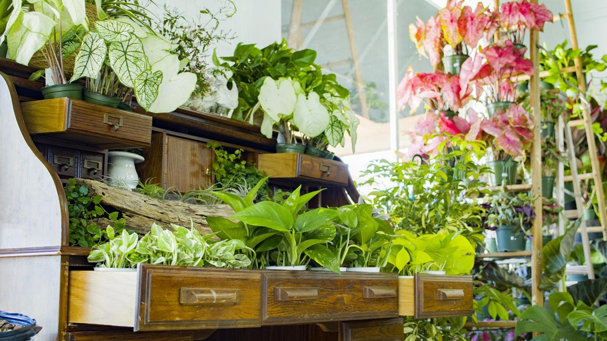 A display of houseplants inside True Leaf Studio in Denton