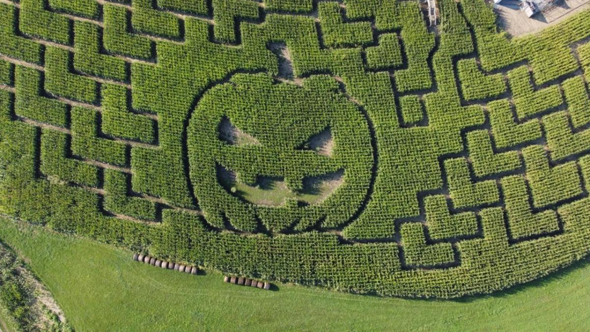 Pumpkin Patch Playground and Corn Maze