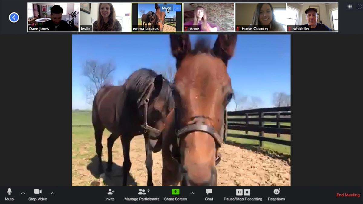 Two horses on camera for a Zoom Conference call.