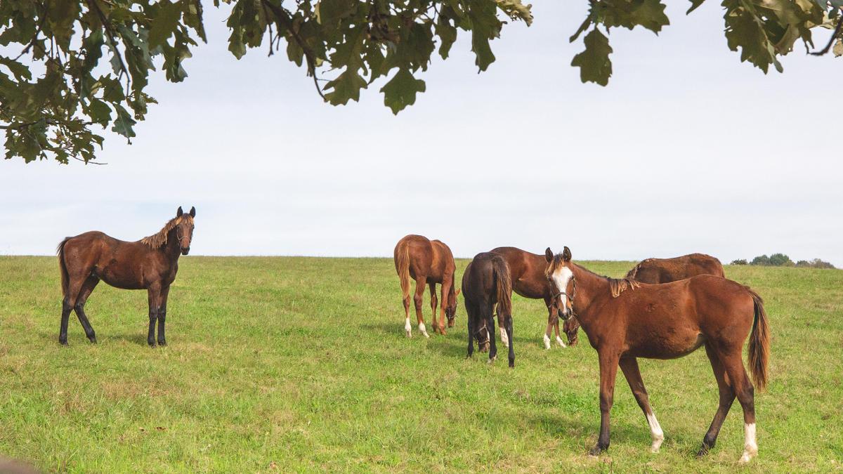 Horses Background Full Size