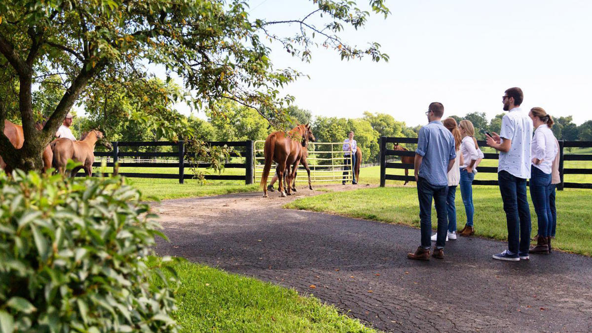 People on a horse farm tour.