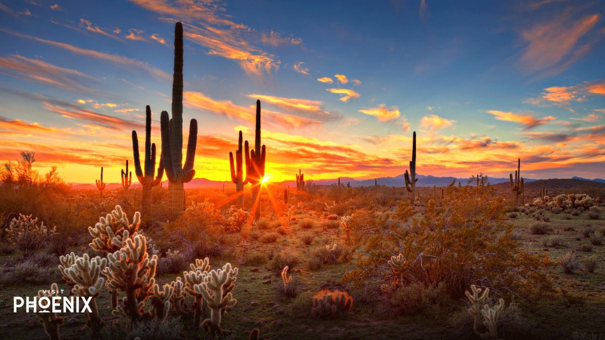 Saguaros at Sunset in Sonoran Desert near Phoenix