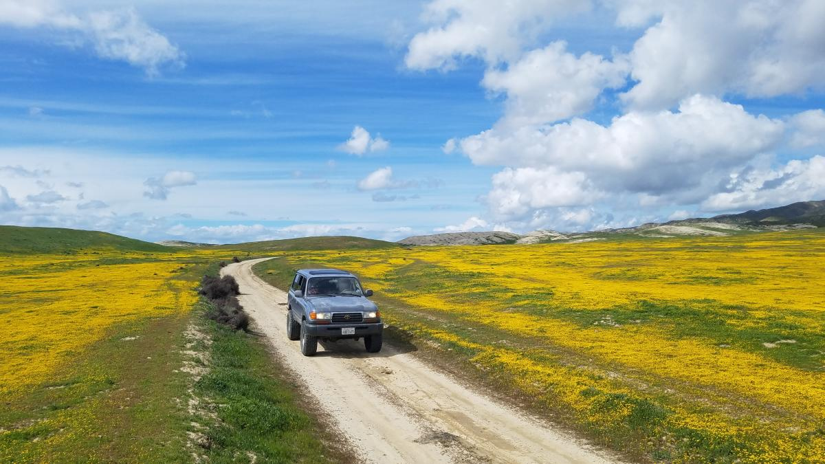 Driving through a wildflower super bloom in Carrizo Plains in SLO CAL