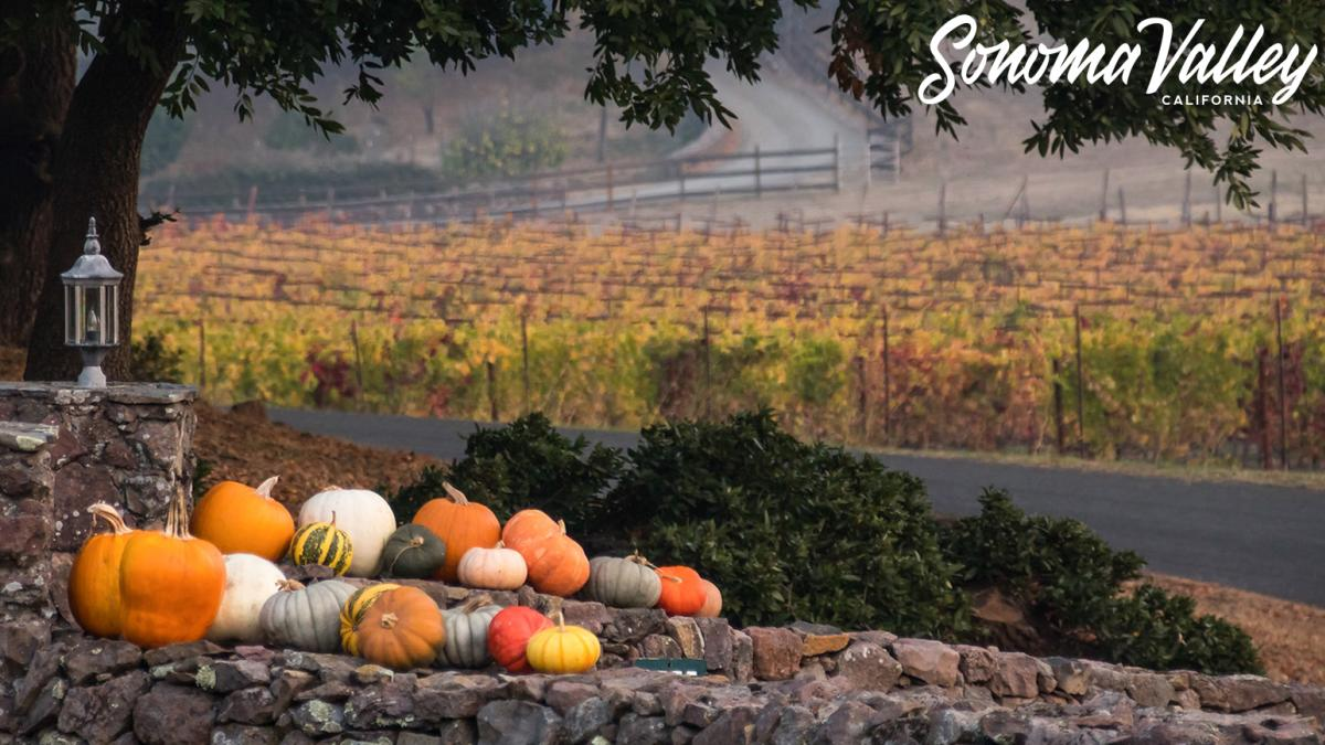 A collection of pumpkins and gourds on a stone wall in front of an autumn vineyard in Sonoma Valley