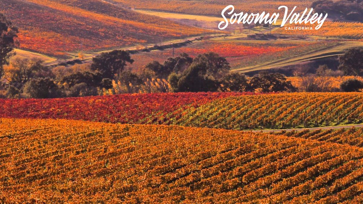 Red, orange and green vineyards criss-cross the Sonoma Valley landscape
